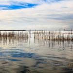 Fishing nets amongst reeds on Lake Albufera
