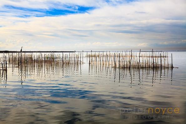 Fishing nets amongst reeds on Lake Albufera