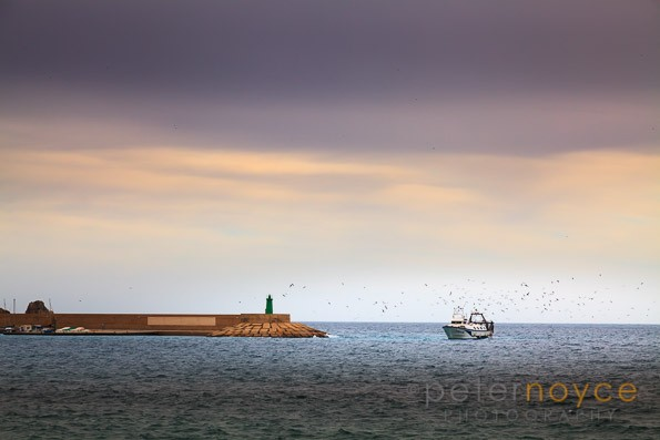 Fishing trawler returning to Javea harbour at the end of the day surrounded by sea birds