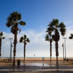Solitary jogger on the promenade of Valencia in the winter sunshine with windswept palm trees